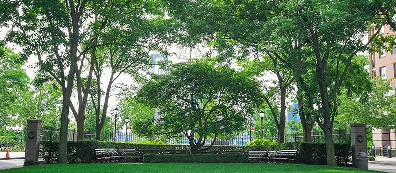 Rector Park