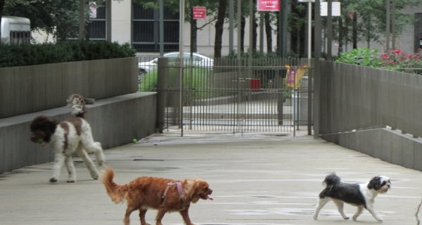 The North End Avenue Island Dog Run